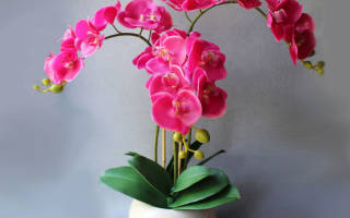 Орхидея засохла что делать