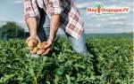 Как сделать почву кислой для гортензии