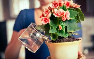 Когда поливать комнатные цветы утром или вечером