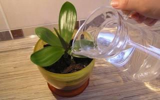 Можно ли поливать цветы дистиллированной водой