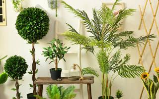 Комнатные растения с большими листьями