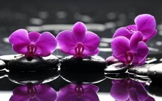 Орхидея в спальне влияние на здоровье
