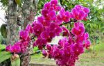 Как часто нужно пересаживать орхидею