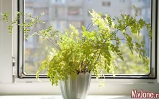 Растения для квартиры