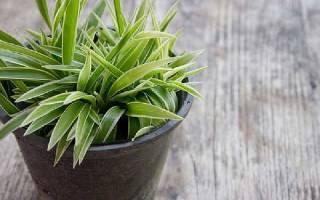Лучшие растения для квартиры