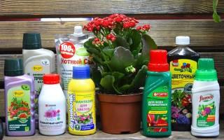 Удобрения для цветущих растений комнатных