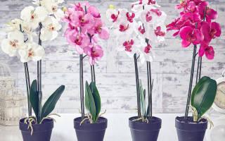 Уход пересадка орхидеи в домашних условиях