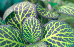 Болезни комнатных растений липкие листья