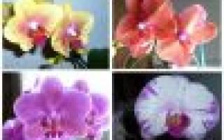 Почему листья орхидеи желтеют