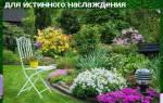 Комнатные цветы аллергены