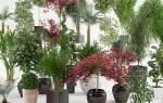 Полезные комнатные растения для человека