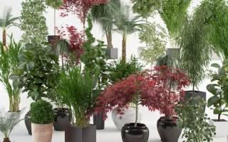 Комнатные растения дома