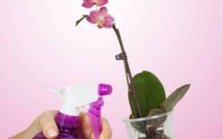 Можно ли опрыскивать орхидею во время цветения