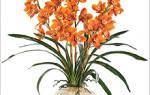Орхидея с длинными узкими листьями
