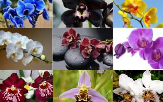 Орхидеи где растут в природе