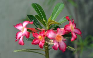 Как заставить цветы цвести