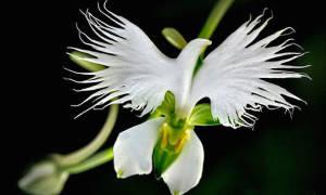 Цветок похожий на женские органы
