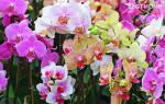 Что любят орхидеи