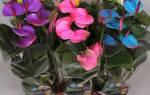 Антуриум мужской цветок
