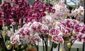 Как вырастить орхидею