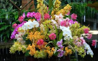 Орхидея дома приметы и суеверия