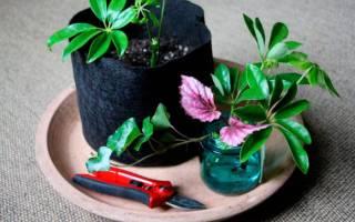 Как размножаются цветы