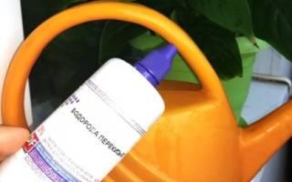 Как поливать цветы перекисью водорода