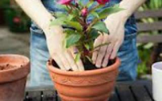 Как правильно пересадить цветы в домашних условиях