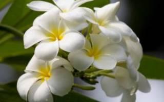 Орхидея по фен шуй