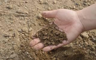 Чем подкислить почву