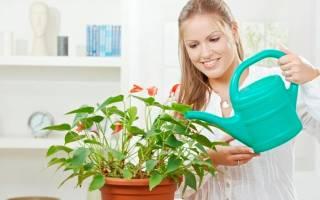 Как поливать антуриум