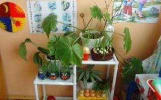 Уход за растениями в детском саду