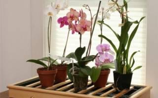 Что делать с отростком орхидеи