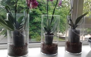 Как часто цветут орхидеи