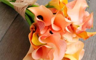 Что означает цветок калла