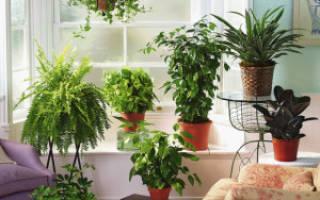 Самые полезные домашние растения