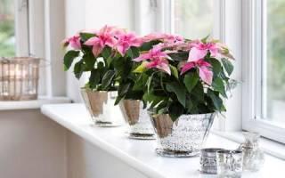 Цветы благоприятные для дома