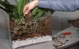 Правильно пересадить орхидею