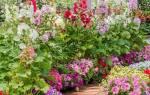 Цветы которые любят солнце