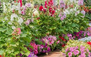 Цветы любящие солнце