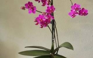 Грунт для орхидей состав своими руками