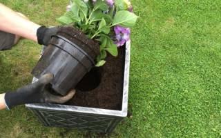 Кислотность почвы для гортензии