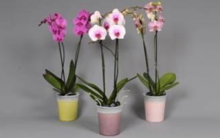 Как приготовить грунт для орхидей своими руками
