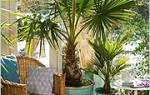 Комнатные растения любящие солнце