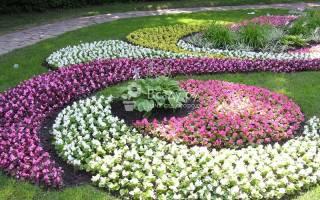 Цветы неприхотливые