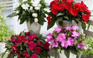 Комнатные растения цветущие круглый год