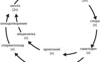 Циклы развития растений