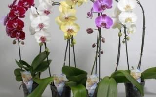 Подарили орхидею в горшке как ухаживать