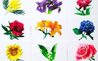 Строение цветка для детей детского сада