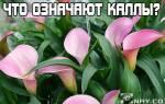 Что означают цветы каллы